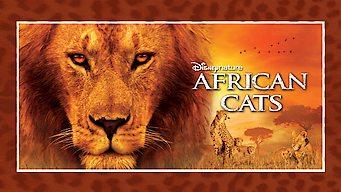 Afrikan kissat (2011)